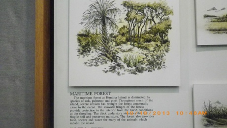 Maritime Forest Display