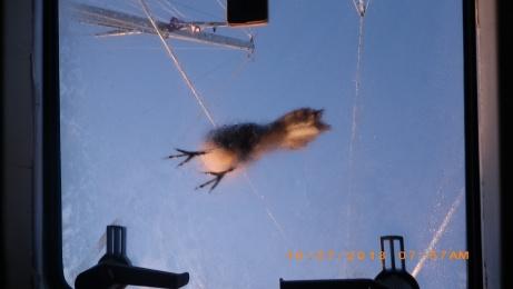 Bird on Forehatch .