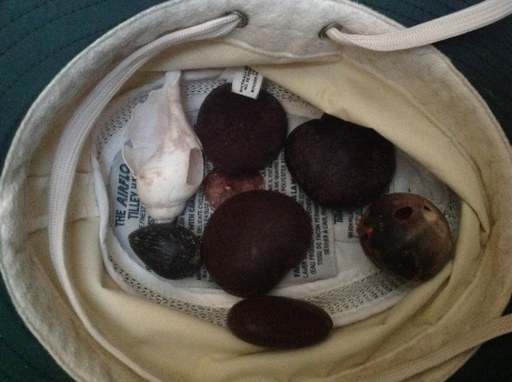 Heart beans, other beans and a baby coconut found on East side Long Island