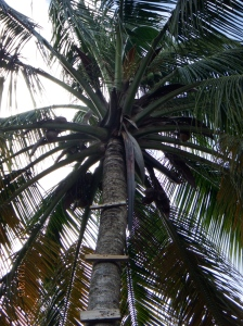 along the way, steps up a palm tree