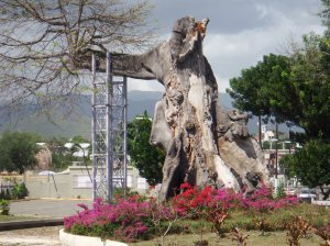 This is the thousand year old tree in Ponce, PR -